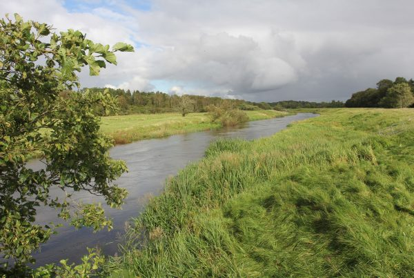 Removal of dams in the Varde river, Denmark